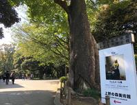 月例上野詣で - ケチケチ贅沢日記