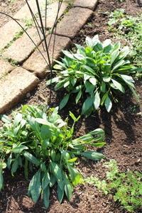 マルチングにバーク堆肥のススメ - ペコリの庭 *