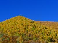 乗鞍高原の紅葉は→黄葉になってきています~。 - 乗鞍高原カフェ&バー スプリングバンクの日記②