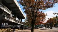 岡崎公園で10月末-2 - 写楽彩2