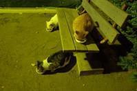 「生活という名前の猫」 - もるとゆらじお