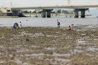 アサリのいない干潟 - Beachcomber's Logbook