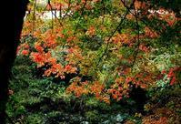 コラ、サル!・・・・久多の紅葉と高島市まちづくり推進会議 - 朽木小川より 「itiのデジカメ日記」 高島市の奥山・針畑からフォトエッセイ