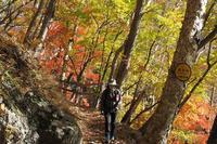 奥日光紅葉ハイキング - チビ猫テンコの生き方