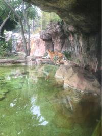 上野動物園に行きました!ゴリラに大興奮 - 食日和 ~アレルギーっ子と楽しい毎日~