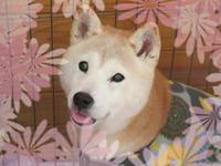 腹ペコ姫 - 柴と徒然日記