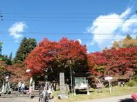 土津神社の紅葉もいいですよ - 猪苗代からのぽぽんた通信
