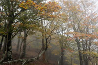 雨の大台ケ原DW② - katsuのヘタッピ風景