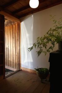 玄関の中の植物 - 池内建築図案室 通信