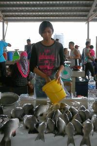 ボルネオ、コタキナバルの、魚市場とマレーシア美人。 - 旅プラスの日記