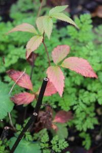 小さすぎる紅葉&植えまくり - ペコリの庭 *