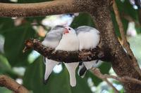 麻溝台公園の鳥舎の鳥達 - つれづれ日記