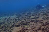 18.10.30スズメ追いながら、ですが - 沖縄本島 島んちゅガイドの『ダイビング日誌』