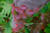 """""""秋の深まり---Spiral's inner garden...10/30tue"""" - SHOP ◆ The Spiralという館~カフェとインポート雑貨のある次世代型セレクトショップ~"""