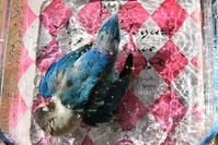 水浴びB.Bの記録→(チポの隣で・10月26日) - FUNKY'S BLUE SKY