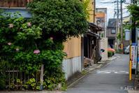 街をチョロスナ -54- - ◆Akira's Candid Photography