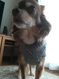 完成☆マロンのセーター - 空を見上げて