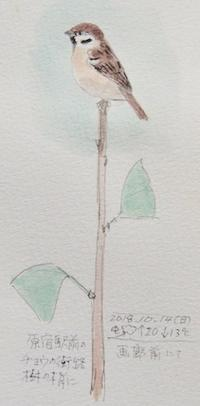 #スズメ『雀』Eurasian tree sparrow  #ネイチャー・ジャーナル #Naturejournal - スケッチ感察ノート (Nature journal)