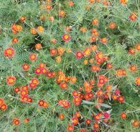 マリアさまの花畑… - 侘助つれづれ