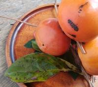 秋は柿色、茜色… - 侘助つれづれ