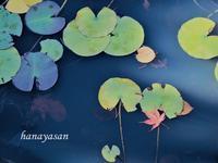 秋色の睡蓮i池 - こもれびの森