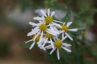 薬草園で咲いていた白い花 - さんじゃらっと☆blog2