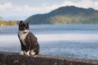 沖島のにゃんこ♪ - ぽとすのくずかご