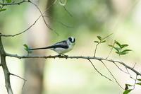 五目鳥撮り・・! - さすらいの写遊人