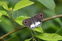 スリランカの旅4日目(2018/10/09) - Sky Palace -butterfly garden- II