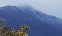 速報・蔵王に冬がやってきた - 標高480mの窓からⅡ