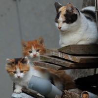 仔猫たち - 愛にゃんブログ