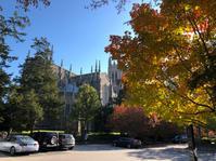 秋の大学 - Tamtam blog