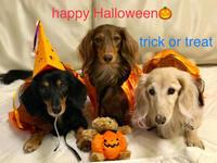 18年10月31日 happy Halloween! - 旅行犬 さくら 桃子 あんず 日記