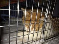 どうぶつ基金で不妊手術 - ☆保護猫*ときどき*うち猫☆