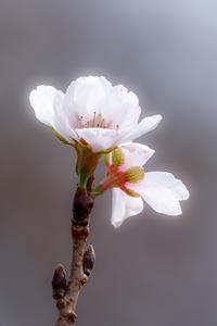 季節外れの花 - やきつべふぉと