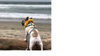 保護犬のアビーがサーフィン世界選手権に - 娘といっしょ