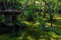 ヤブラン咲く祇王寺 - 花景色-K.W.C. PhotoBlog