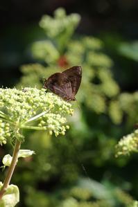 海岸近くで秋のチョウを探す - 蝶超天国