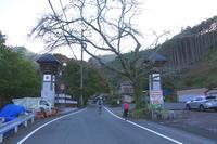 鳳来寺山(愛知県新城市) - 山の花、町の花
