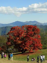 長野そぞろ歩き・池田町:大峰高原の七色大カエデ - 日本庭園的生活