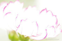 cosmos*Ⅱ - It's only photo 2