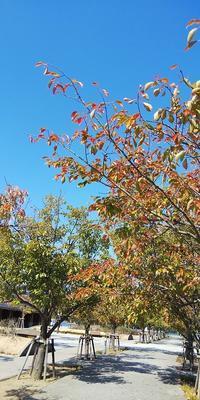 鳴門ウチノ海総合公園の秋 - 藍。の着物であるこう
