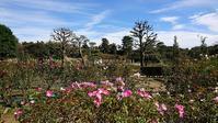 ばら苑ボランティアガイドをさせて頂きました。 - 元木はるみのバラとハーブのある暮らし・Salon de Roses