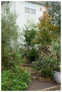 紅葉が綺麗です❤ - natu     * 素敵なナチュラルガーデンから~*     福岡で庭造り、外構工事(エクステリア)をしてます