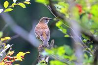 待ち人来たらず - 綺麗な野鳥たち