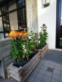 晩秋です!菊の花 - 萩セミナーハウスBLOG