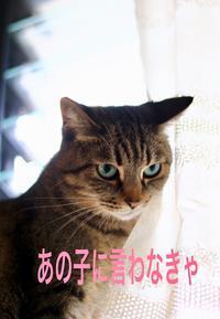 にゃんこ劇場「ななちゃんの悩み」 - ゆきなそう  猫とガーデニングの日記