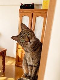 「iPhone XR」に買い替え - きょうだい猫と仲良し暮らし