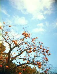 実りの秋 - パトローネの中