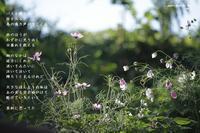 径 - Poetry Garden 詩庭
